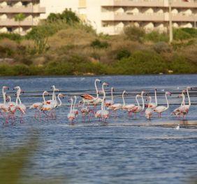 Las Salinas de Calp, un Paraíso Para el Avistamiento de Aves